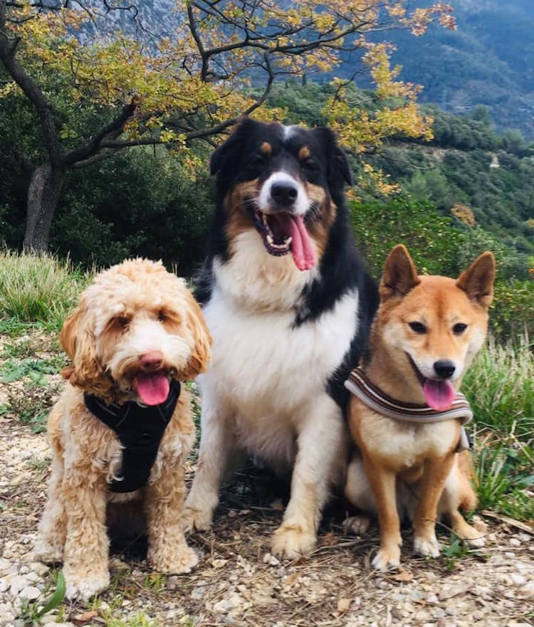 Victoria Morris dogs
