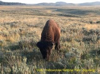 Holli - Yellowstone National Park