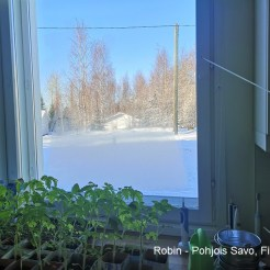 Robin - Pohjois-Savo, Finland