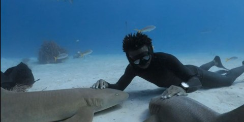 Shark Dive with André Musgrove