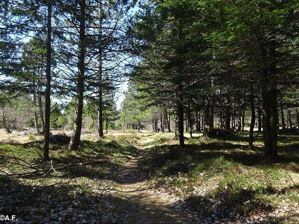Val Trebbia passeggiata nei boschi liguri