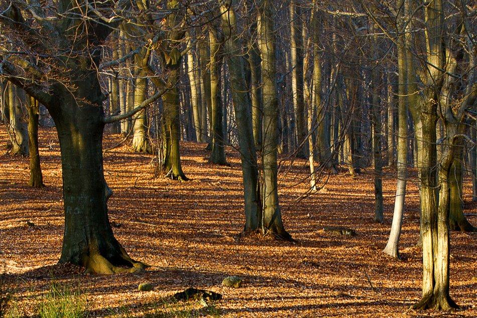 Riserva naturale dell'adelasia bosco in autunno