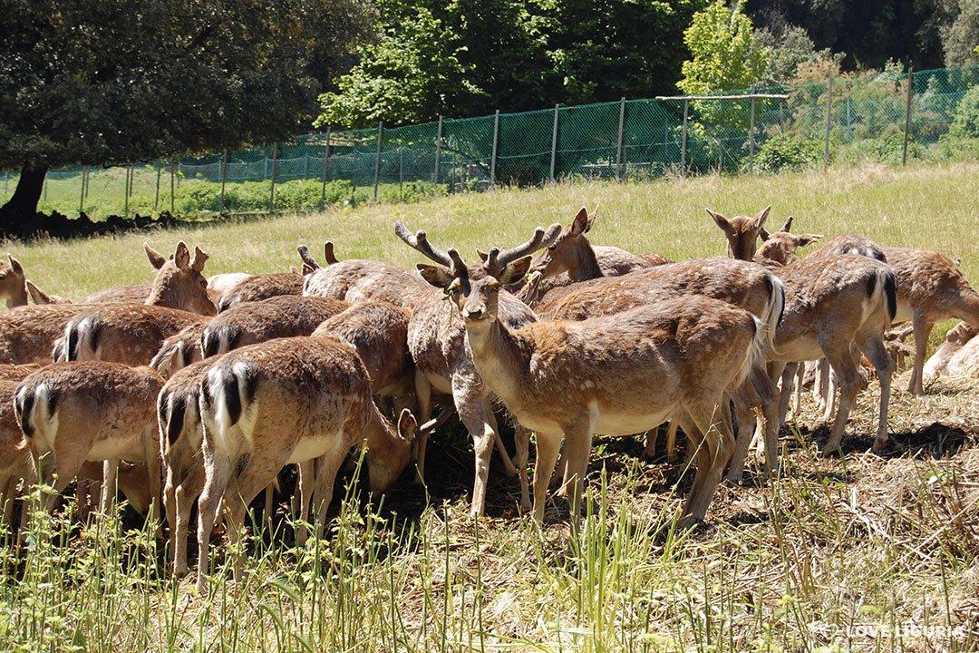 Villa Duchessa di Galliera daini nei parchi in Liguria