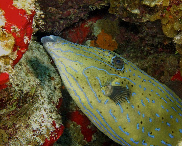 Tormentos-buceo-Isla Cozumel