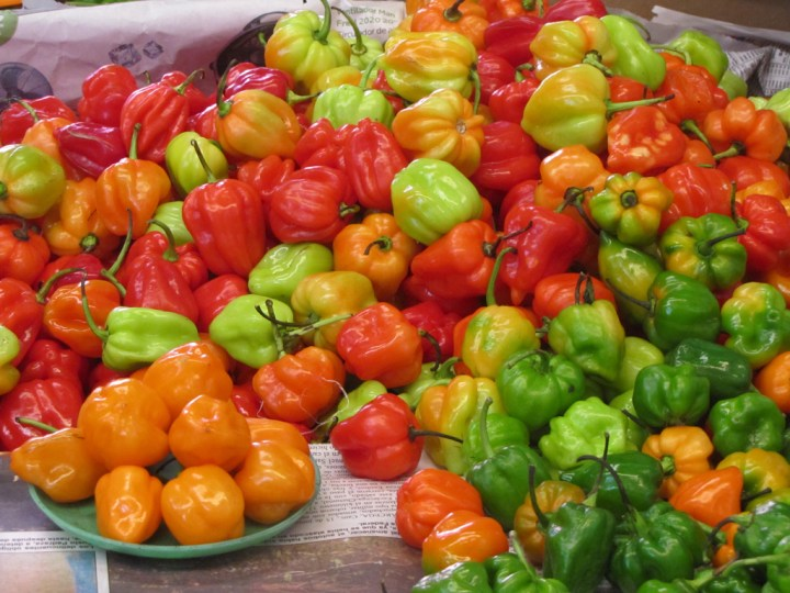 habanero-chiles-mexico