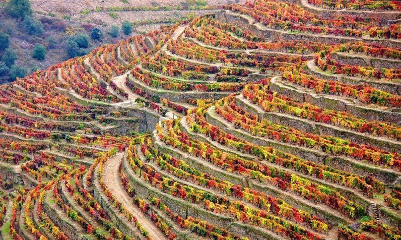 winery-1357947_1280