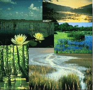 biodiversit