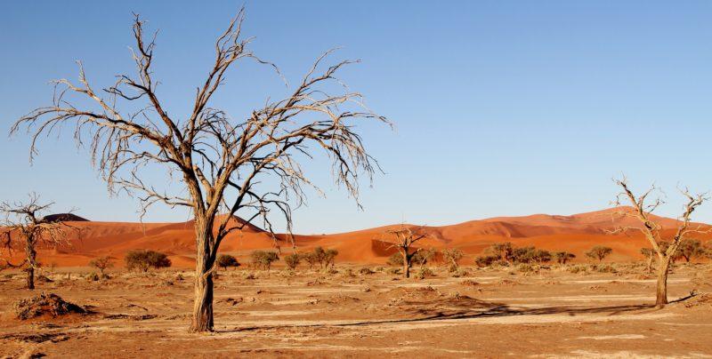 Giornata mondiale contro la desertificazione e la siccità