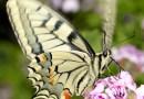 Biodiversità: sconosciuta e sottovalutata?