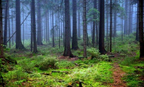 La lotta per salvare le ultime foreste europee