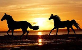 Gli ultimi cavalli selvaggi d'Europa – La Rivista della Natura