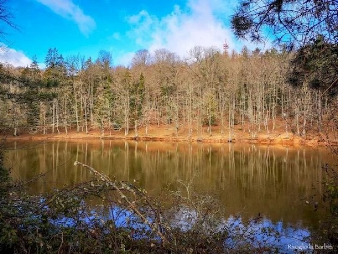Gargano inverno foresta umbra