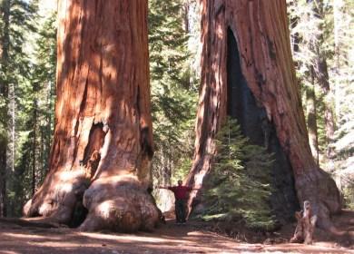 Kau Hampir Bernama Sequoia