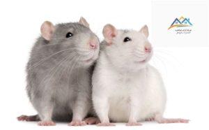 افضل طريقة للقضاء علي الفئران