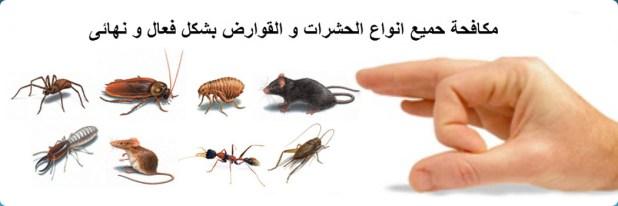 شركة رش حشرات بالرياض