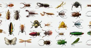 541793 orig 728x300 - افضل شركات مكافحة الحشرات بالرياض 0594261363