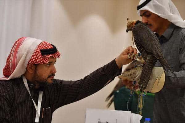 اللجنة المنظمة لمهرجان الملك عبدالعزيز للصقور تعلن انتهاء التسجيل لمسابقات الملواح واستمرار التسجيل في المزاين