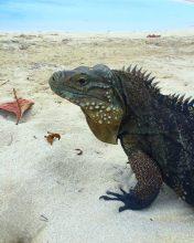cayo-iguanas-cuba