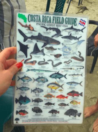 plongée-panama-isla-coiba-parc