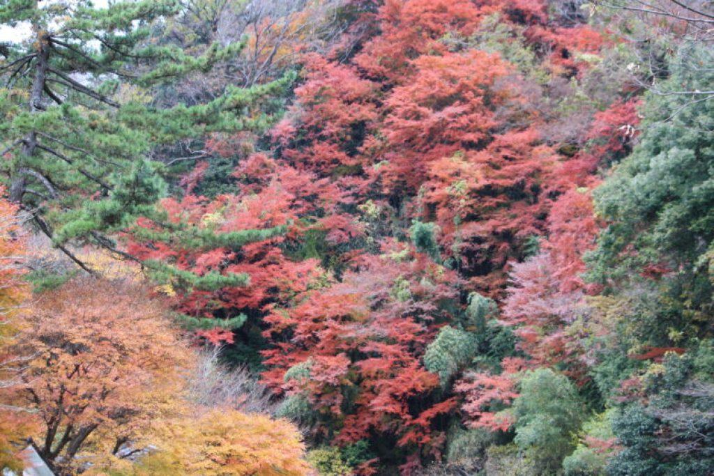 箱根 秋 紅葉