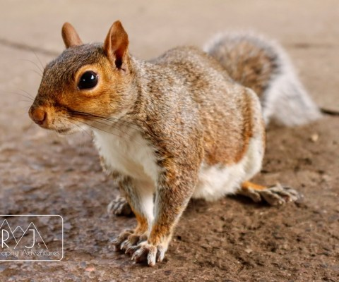 """""""The Curious Squirrel"""""""