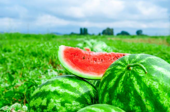 melon health 2016 tips 1