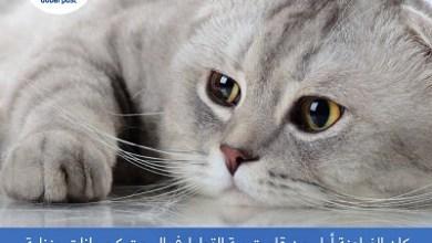 Photo of موعد تاريخ اليوم العالمي للقطط , متى يوم القطط