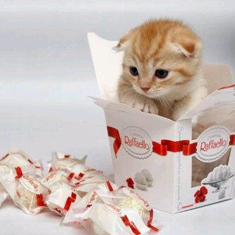 رمزيات قطة خلفيات قطط صور بنت مع قطة جميلة مجلة رجيم