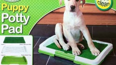 صورة تدريب الكلاب على الحمام بطرق بسيطة وسهلة