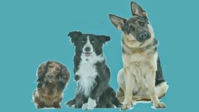 صورة معلومات هامة قبل تربية الكلب