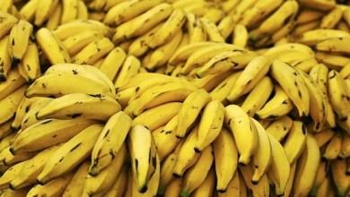صورة تعرفى على الفوائد العظيمة للموز وقشر الموز