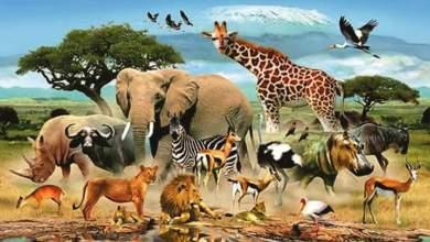 Photo of أسماء وتصنيف جميع الحيوانات في العالم