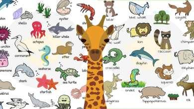 صورة اسماء الحيوانات و الطيور و الاسماك بالأنجليزي