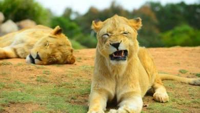 Photo of أكبر 14 حديقة للحيوانات في العالم في عام 2020