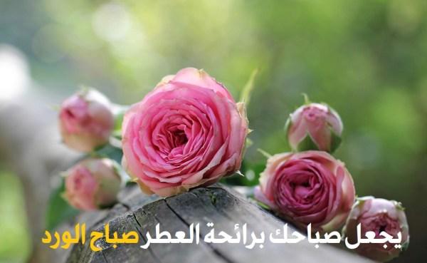 يجعل صباح برائحة العطر صباح الورد