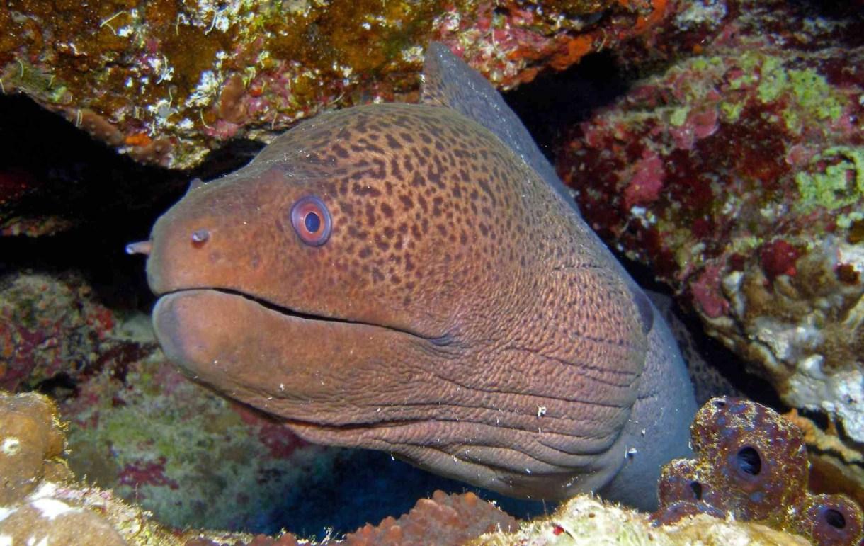 أخطر 10 أسماك في العالم