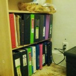 Writer's block? I have produced two shelves of rough drafts and partial material.