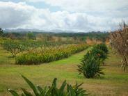 Hawaii Vacation - Dole Plantation 3