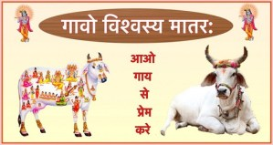 Beautiful Gau Mata Status Photo Pics images