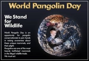 World Pangolin Day Photo images For Save Pangolin