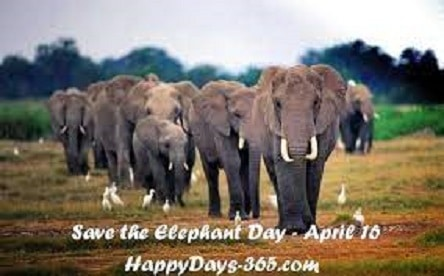Latest Save the Elephant Day 2021 images Photo Pics