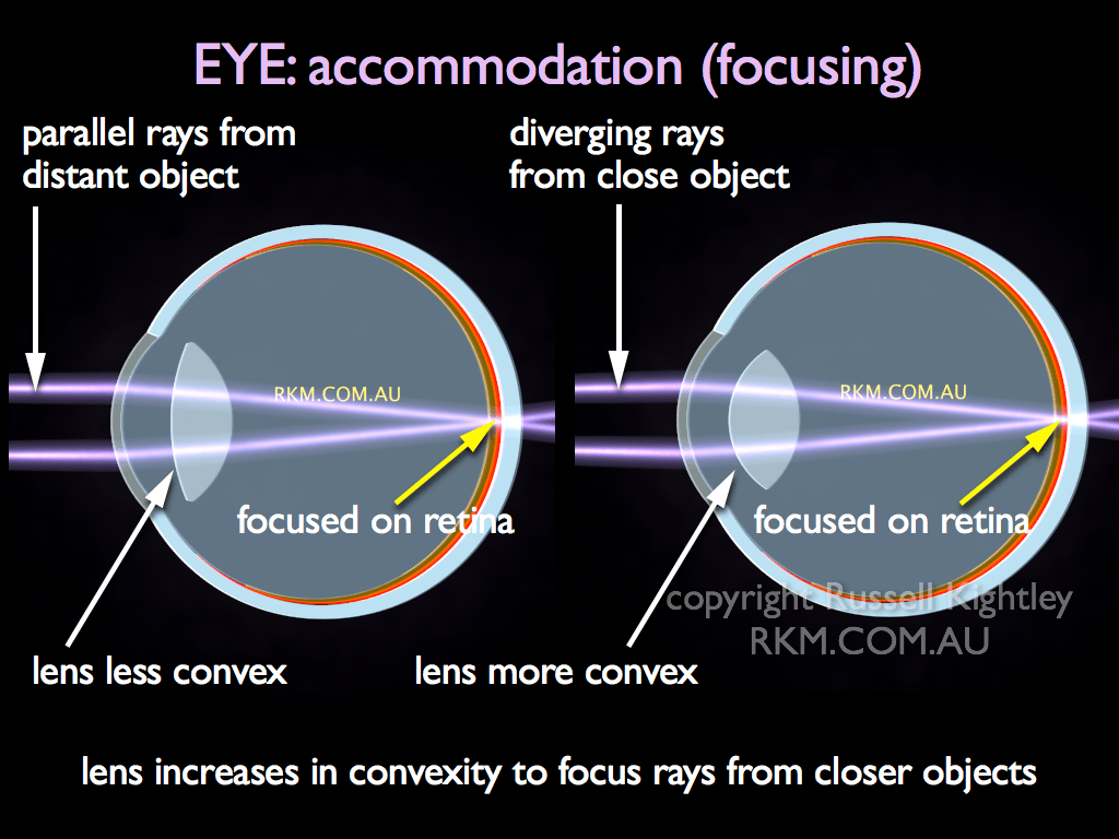 Video Animation Eye Accommodation Or Focusing