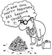 """Образцовый бюрократ: """"Каждому муравью - по трудовой книжке!"""""""