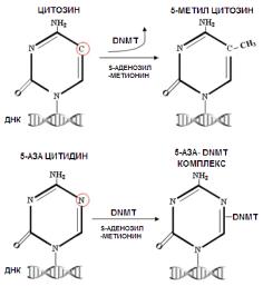 Подавление метилирования ДНК