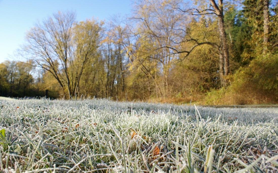 Morning frost on grass (see attribution below)
