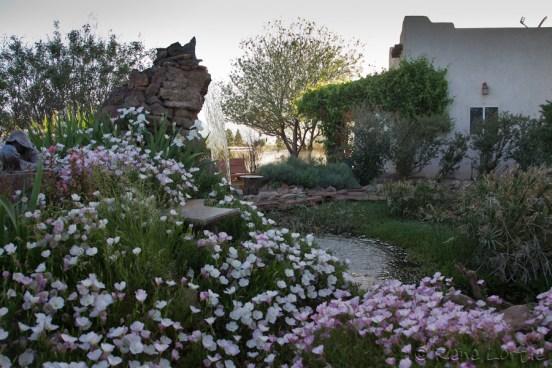 Le jardin chez Rusty