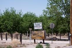 Plantation de pacanes. Il y en a beaucoup au sud-ouest du Texas.