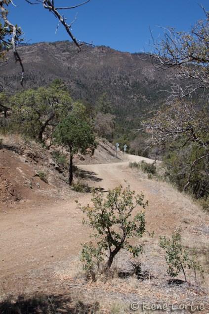 Chemin forestier dans les Chiricahua