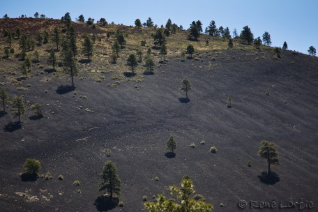Rocks and volcanic dust around Sunset Crater Volcano. Ponderosa pines grow there.