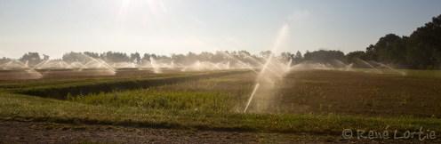 Champs cultivés près de Tomah au Wisconsin